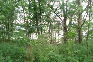 _Trees 70 Ridge Street