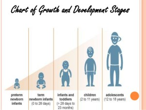 3 stages-of-growth-and-development-3-638